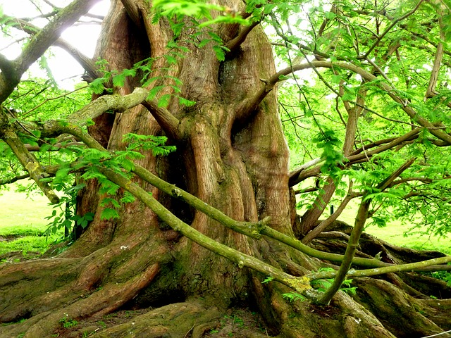 Resolve Pain and Stress at the Root